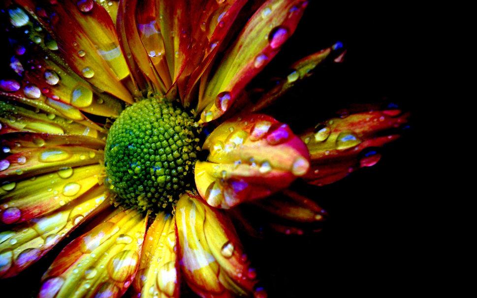 1133527__picaturi-de-apa-pe-floare_p